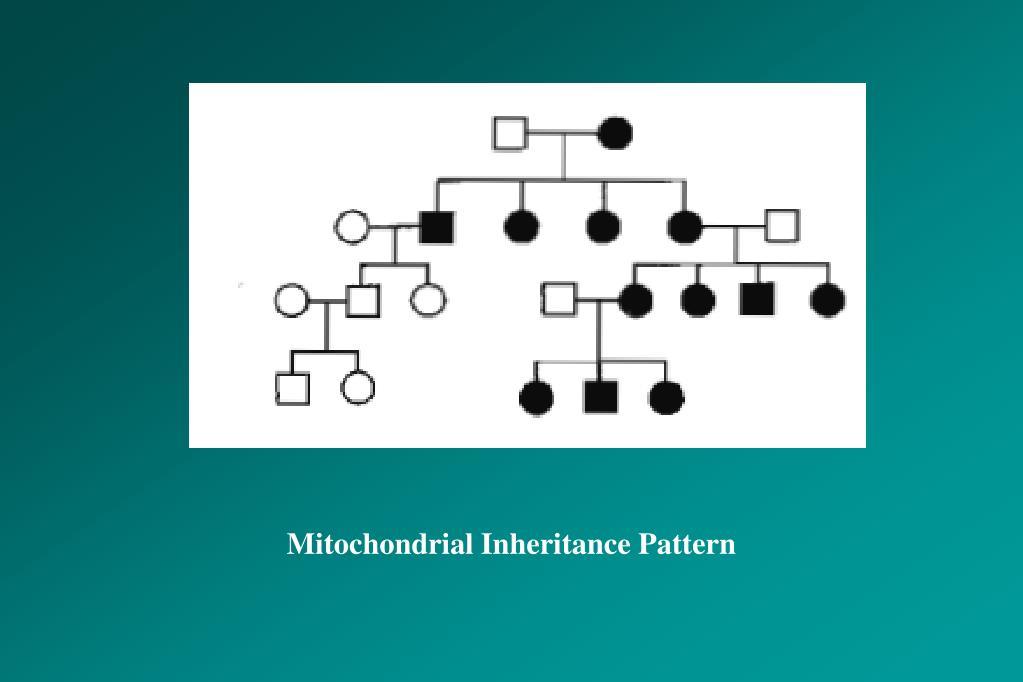 Mitochondrial Inheritance Pattern