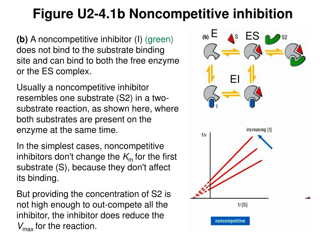 Figure U2-4.1b Noncompetitive inhibition