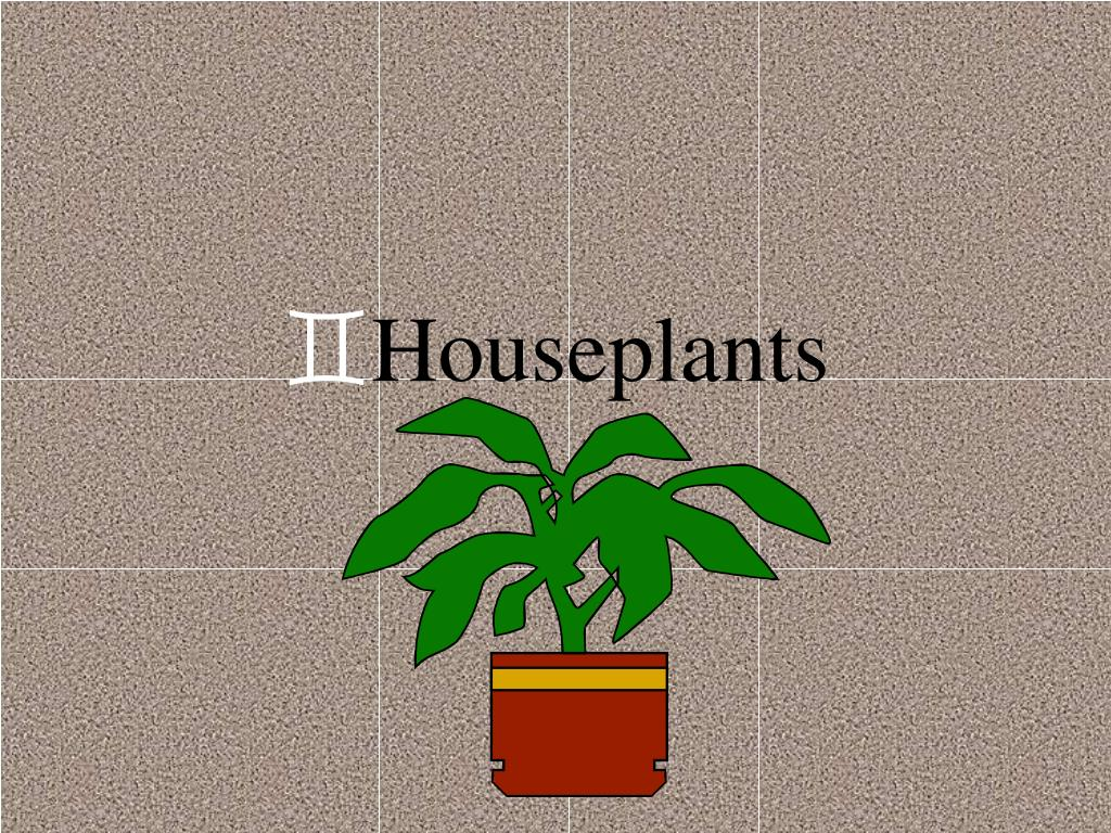 houseplants l.