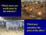 which steers are worth more to the industry