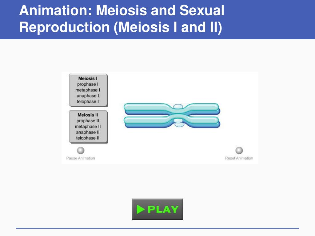 Animation: Meiosis and Sexual Reproduction (Meiosis I and II)