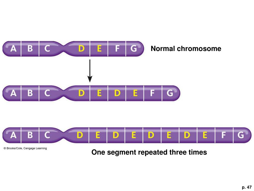 Normal chromosome