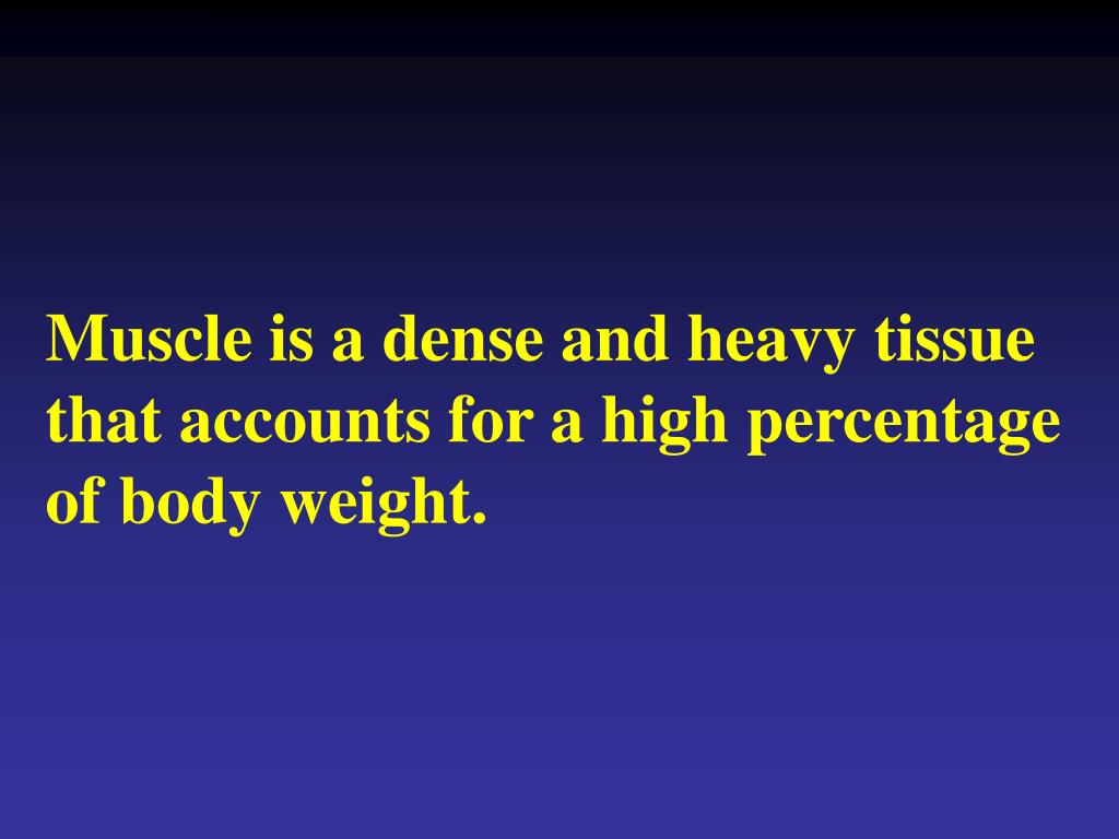 Muscle is a dense and heavy tissue that accounts for a high percentage of body weight.