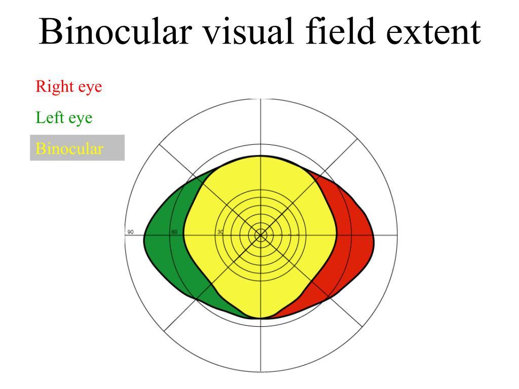 Binocular visual field extent