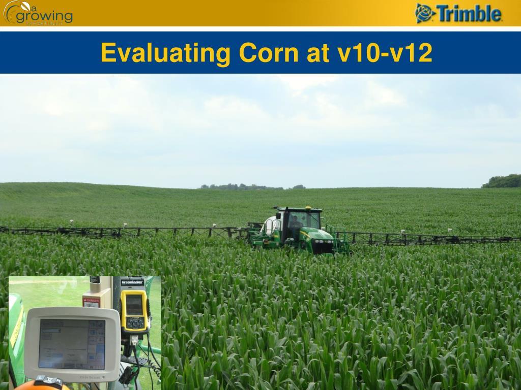 Evaluating Corn at v10-v12