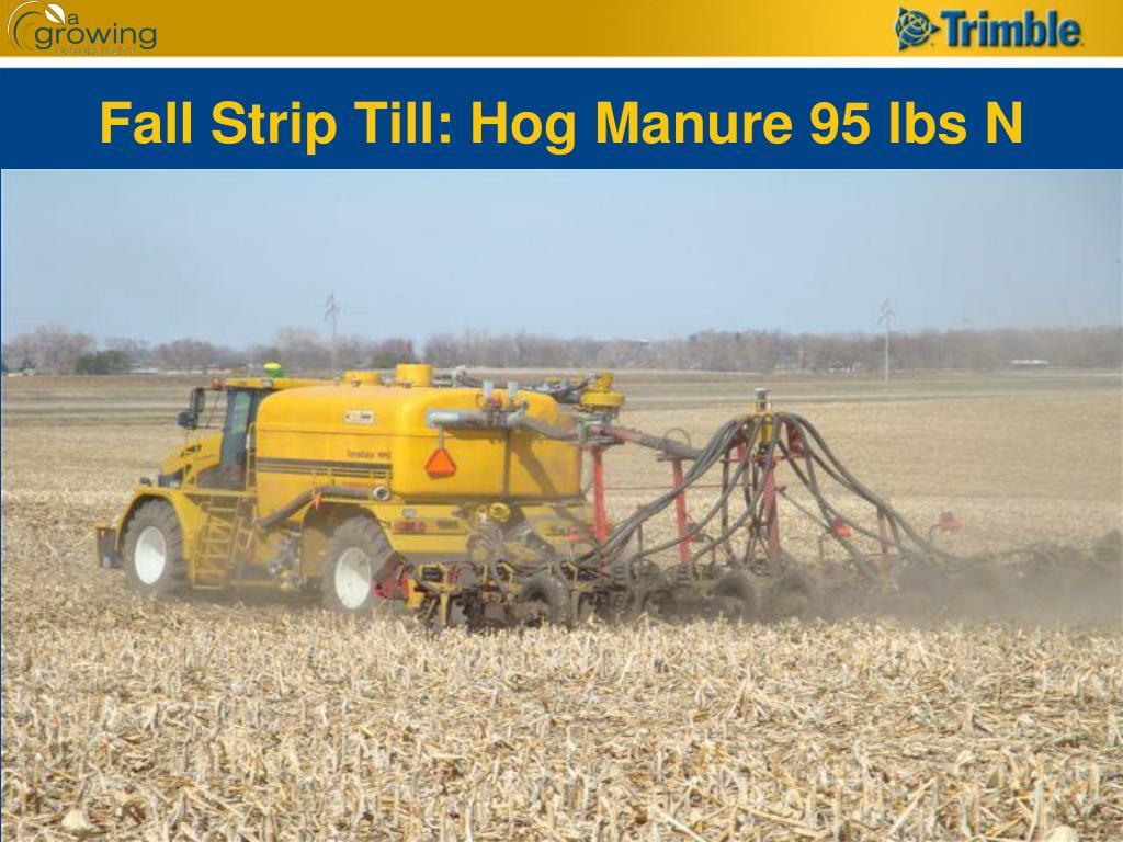 Fall Strip Till: Hog Manure 95 lbs N