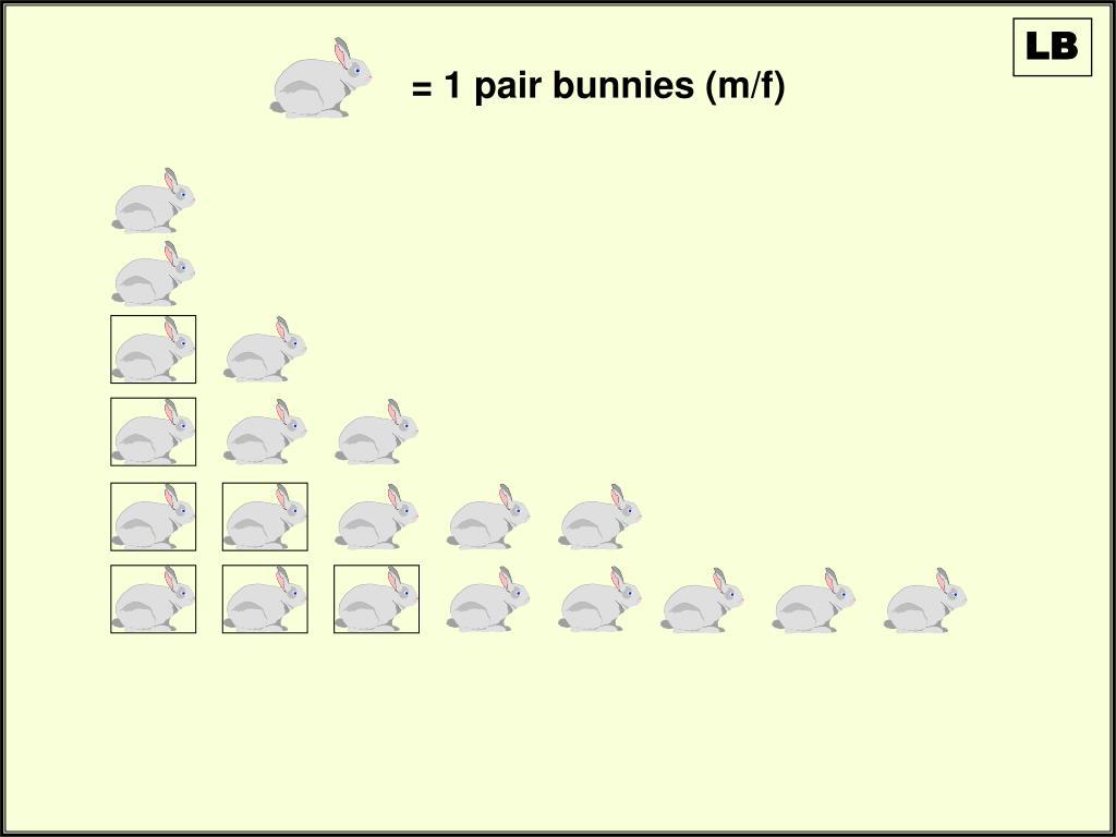 = 1 pair bunnies (m/f)