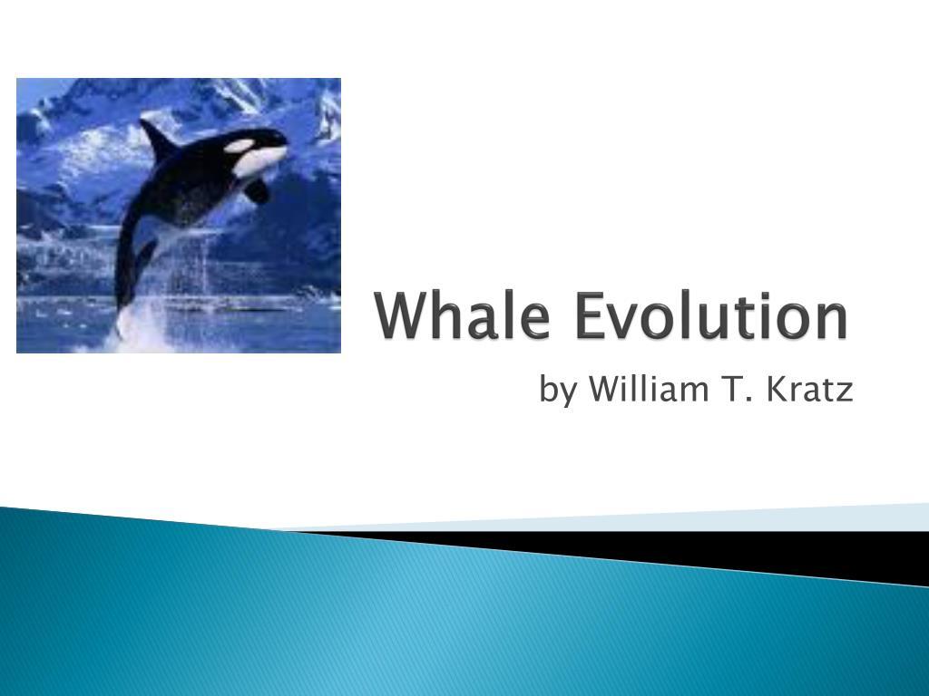 Whale Evolution