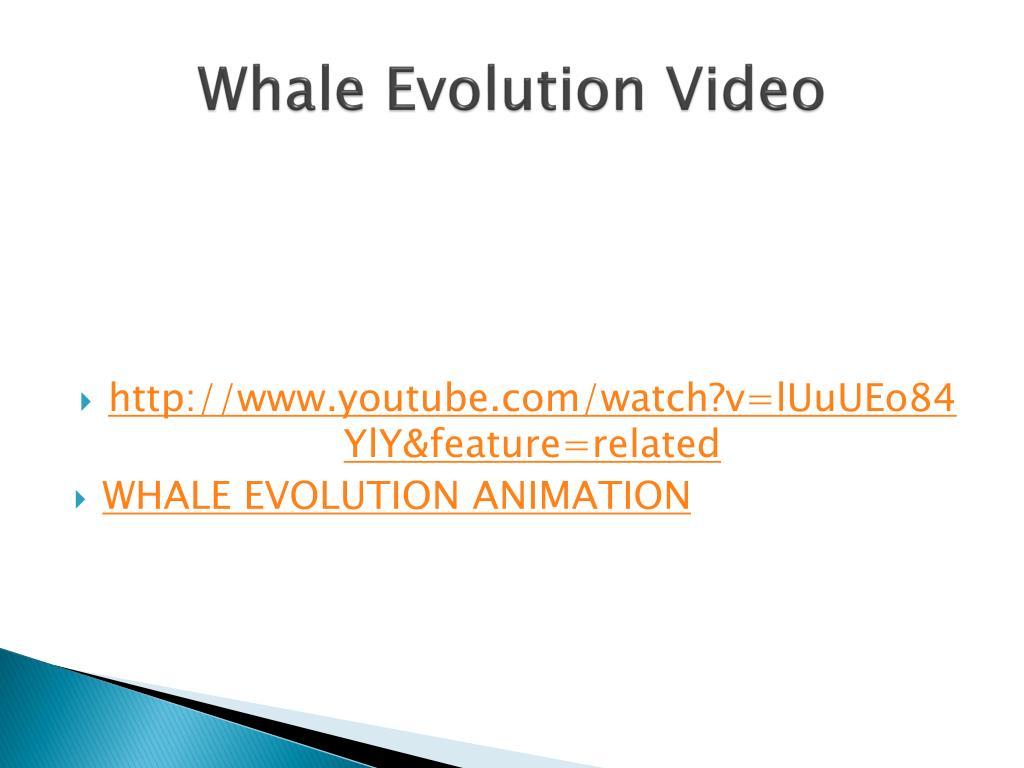 Whale Evolution Video