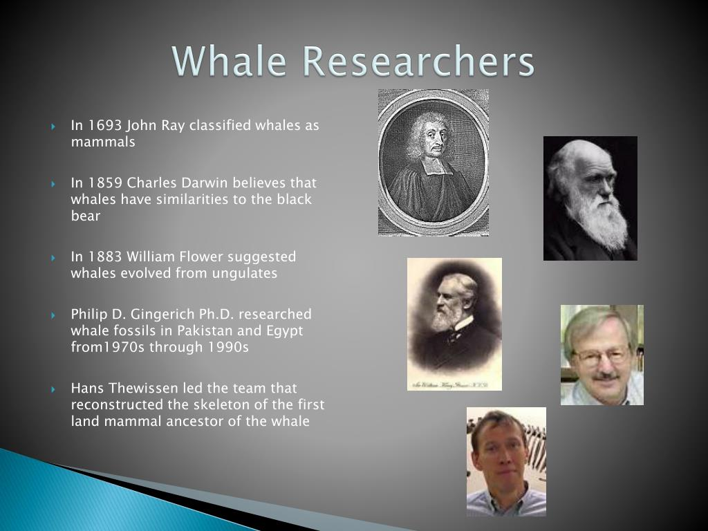 Whale Researchers