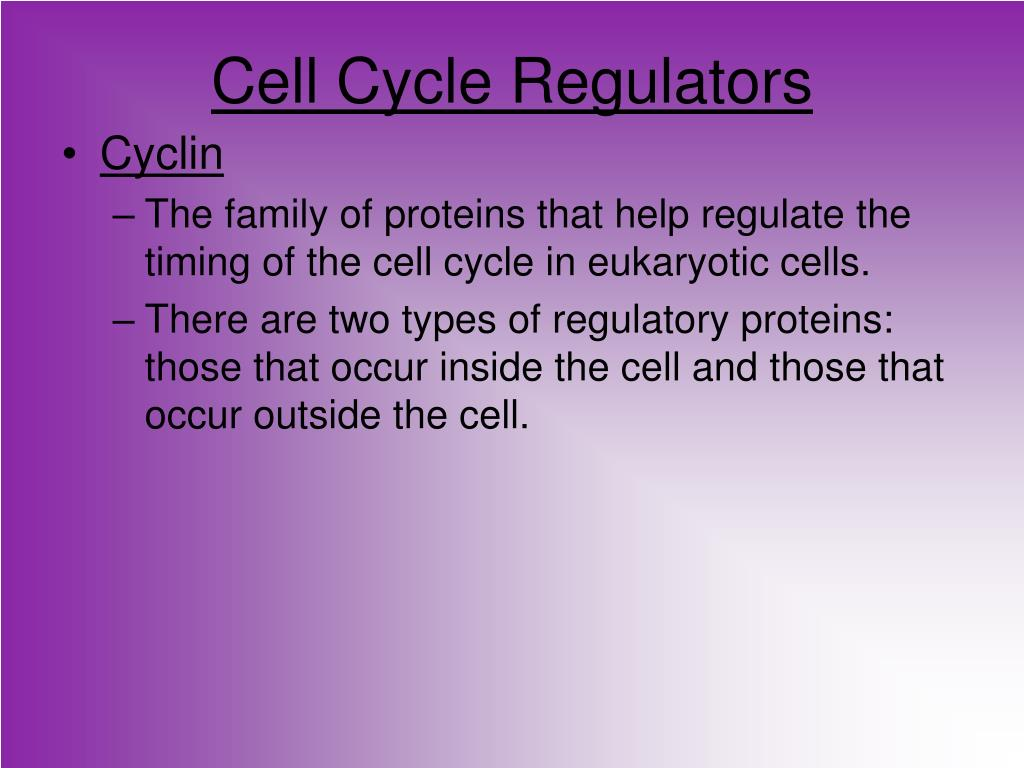 Cell Cycle Regulators