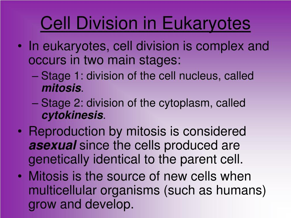 Cell Division in Eukaryotes