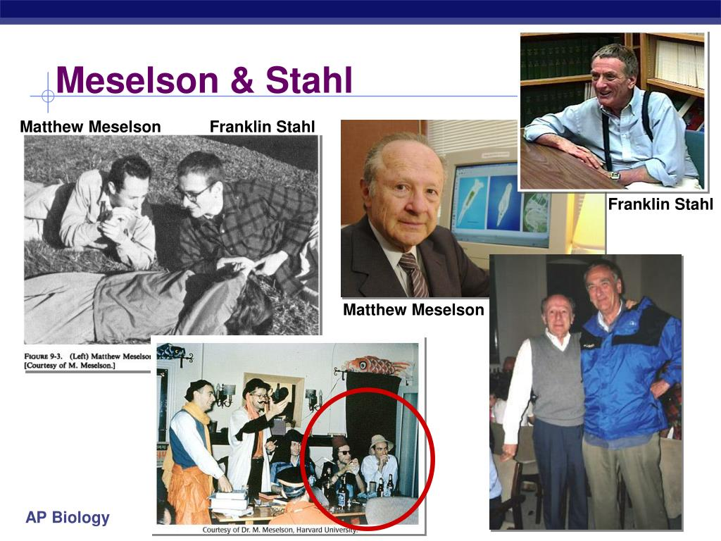 Meselson & Stahl