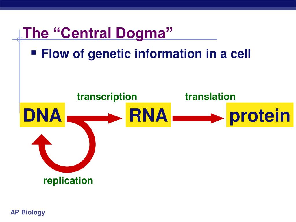 """The """"Central Dogma"""""""