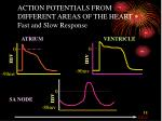 action potentials from different areas of the heart fast and slow response