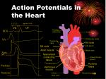 action potentials in the heart