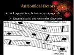 anatomical factors