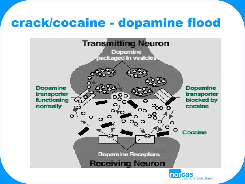 crack/cocaine - dopamine flood