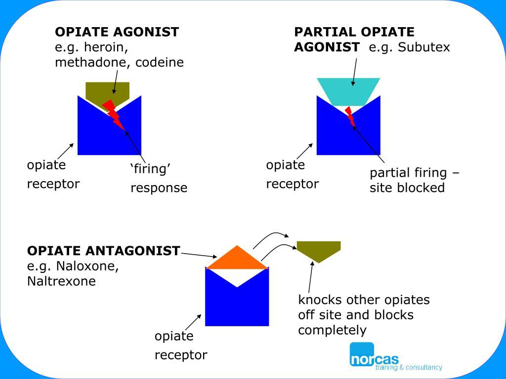 OPIATE AGONIST