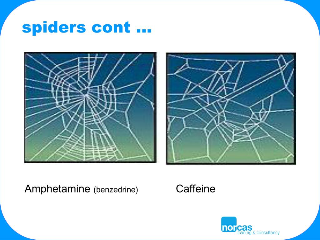 spiders cont …