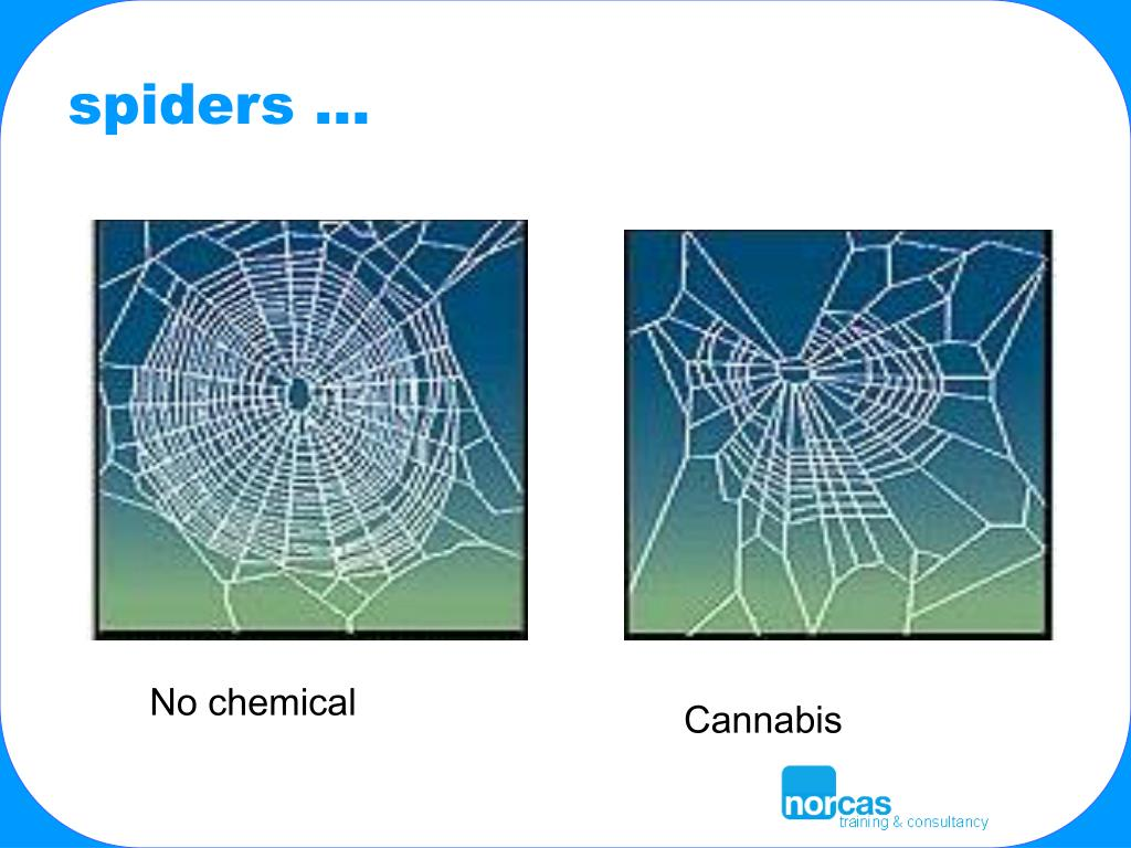 spiders …