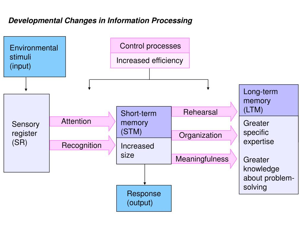 Developmental Changes in Information Processing