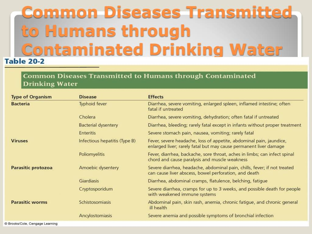 Common Diseases Transmitted to Humans through Contaminated Drinking Water