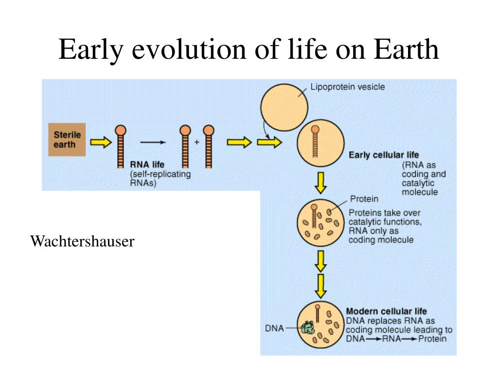 early evolution of life on earth l.