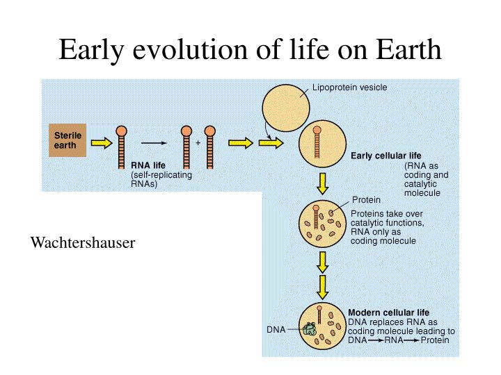 early evolution of life on earth n.