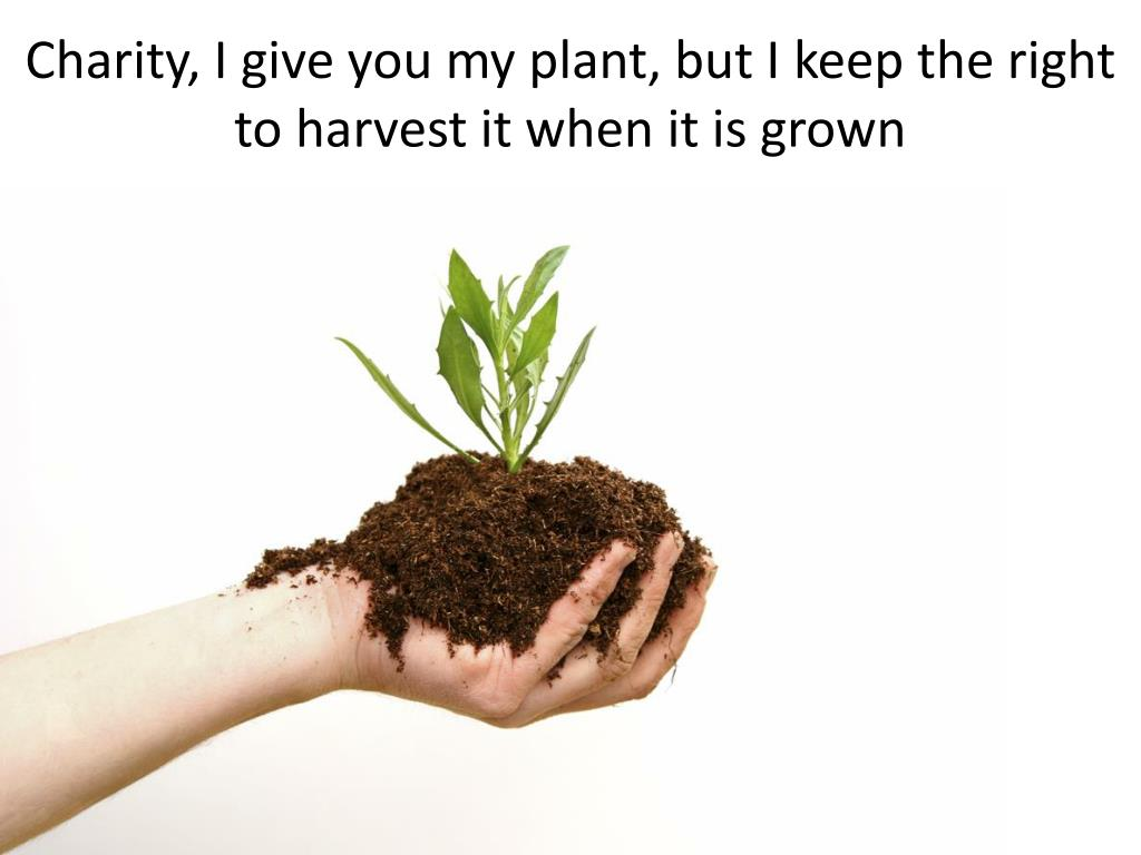 Charity, I give you my plant, but I keep the right to harvest it when it is grown