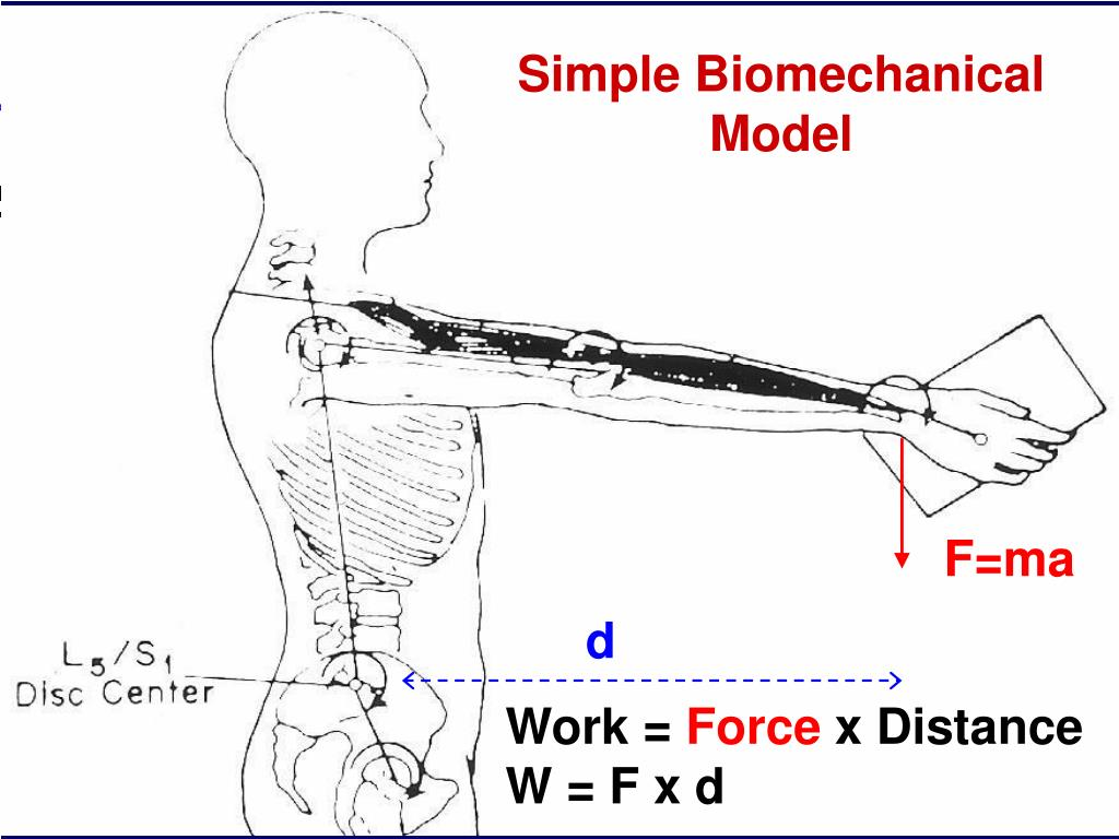 Simple Biomechanical Model