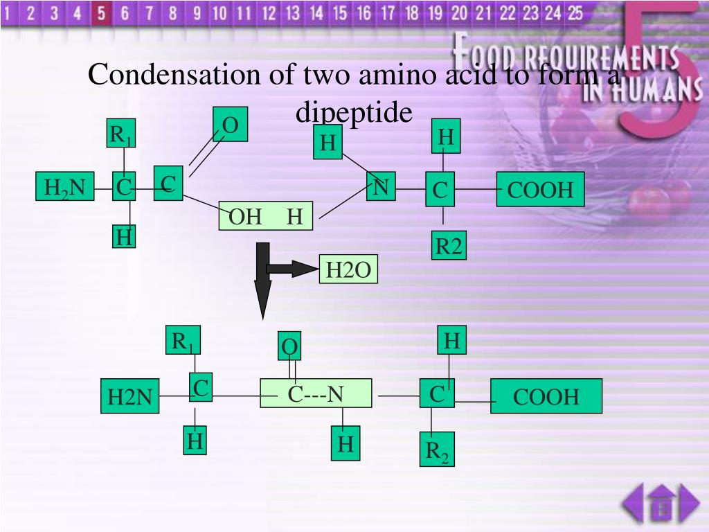 Condensation of two amino acid to form a dipeptide