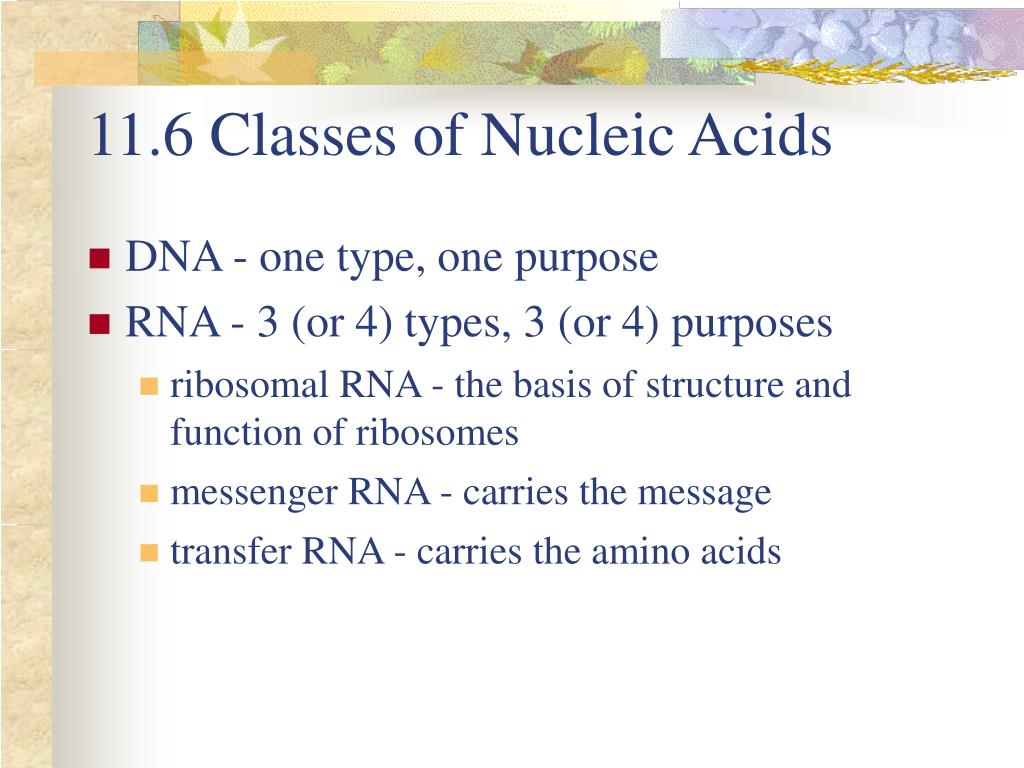 11.6 Classes of Nucleic Acids