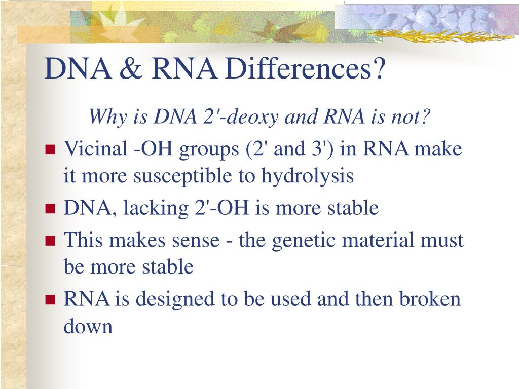 DNA & RNA Differences?
