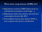 what does map kinase erk do