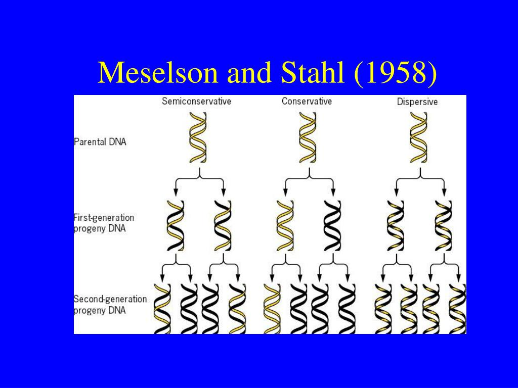 Meselson and Stahl (1958)