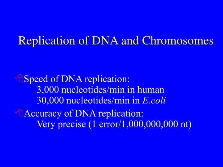 Replication of dna and chromosomes