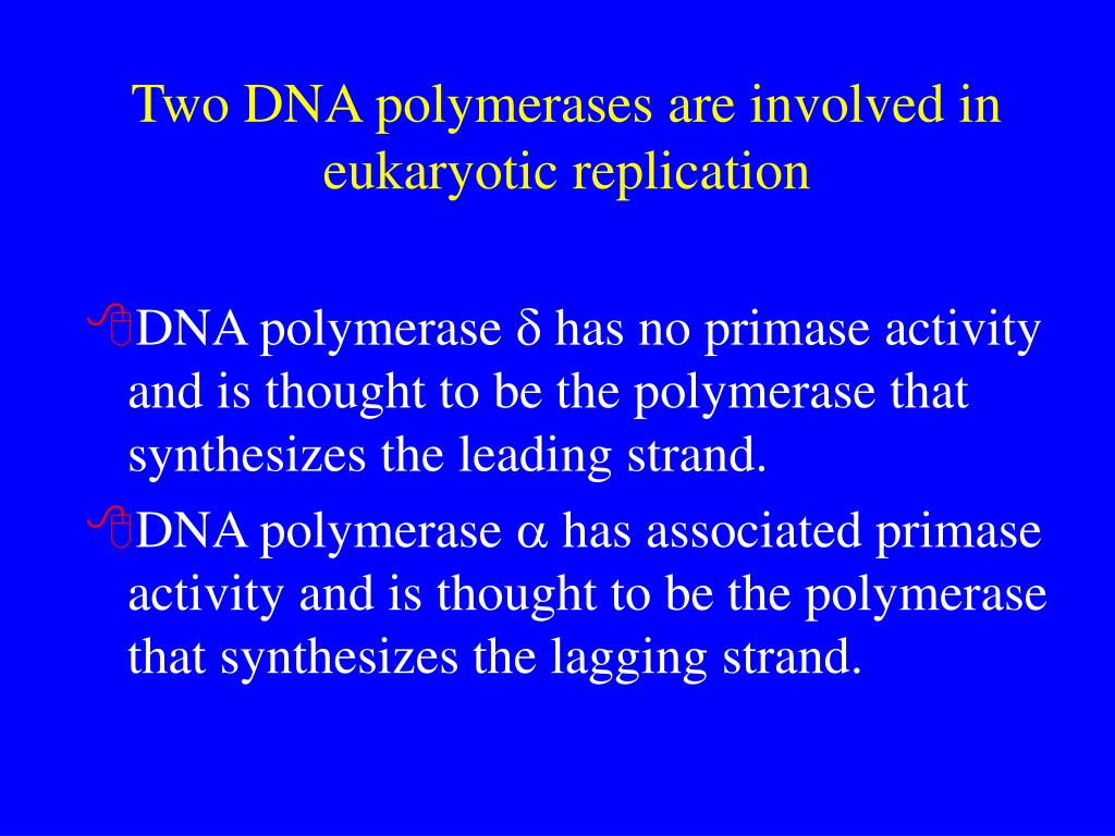 Two DNA polymerases are involved in eukaryotic replication