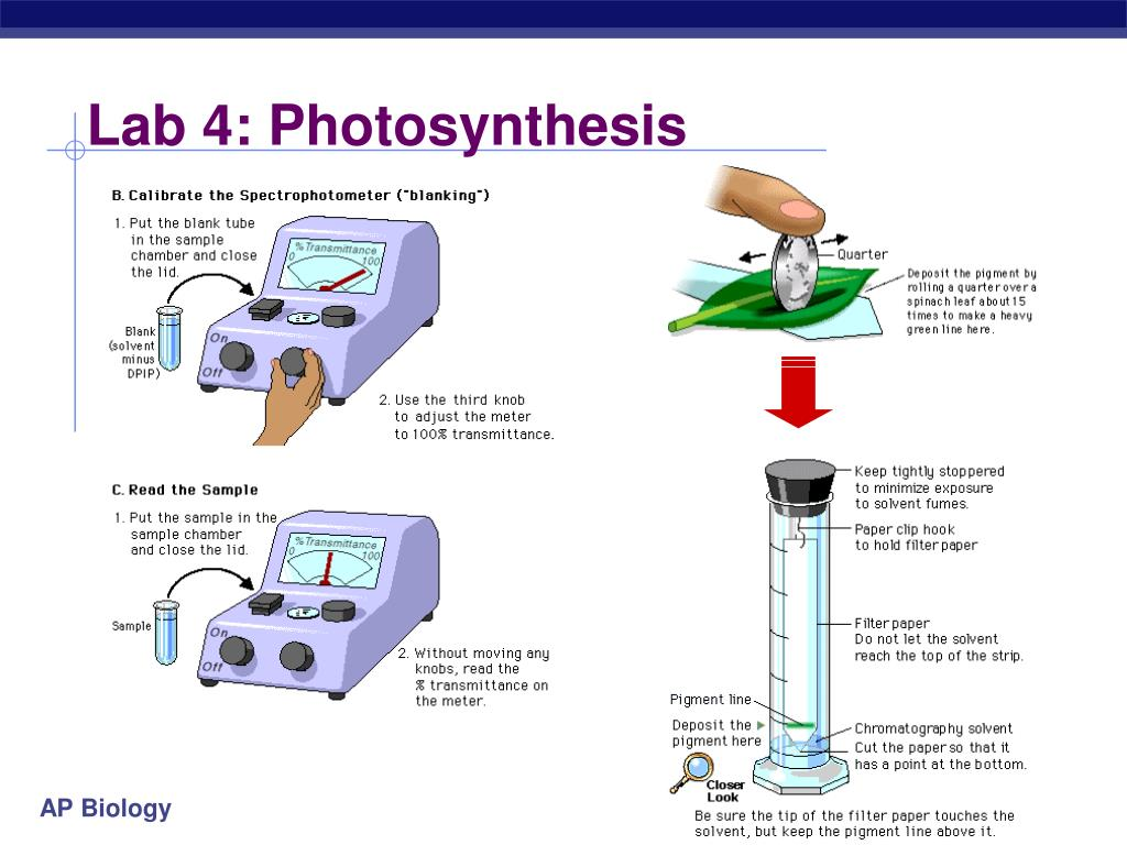 Lab 4: Photosynthesis