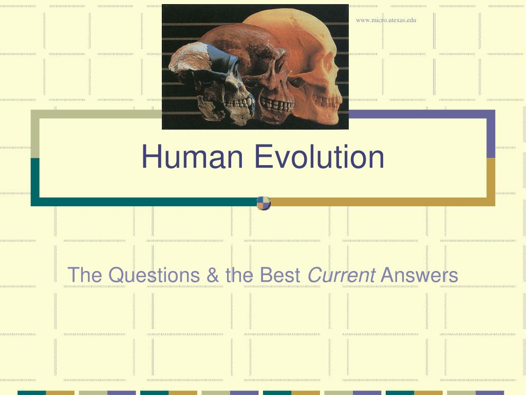 human evolution l.