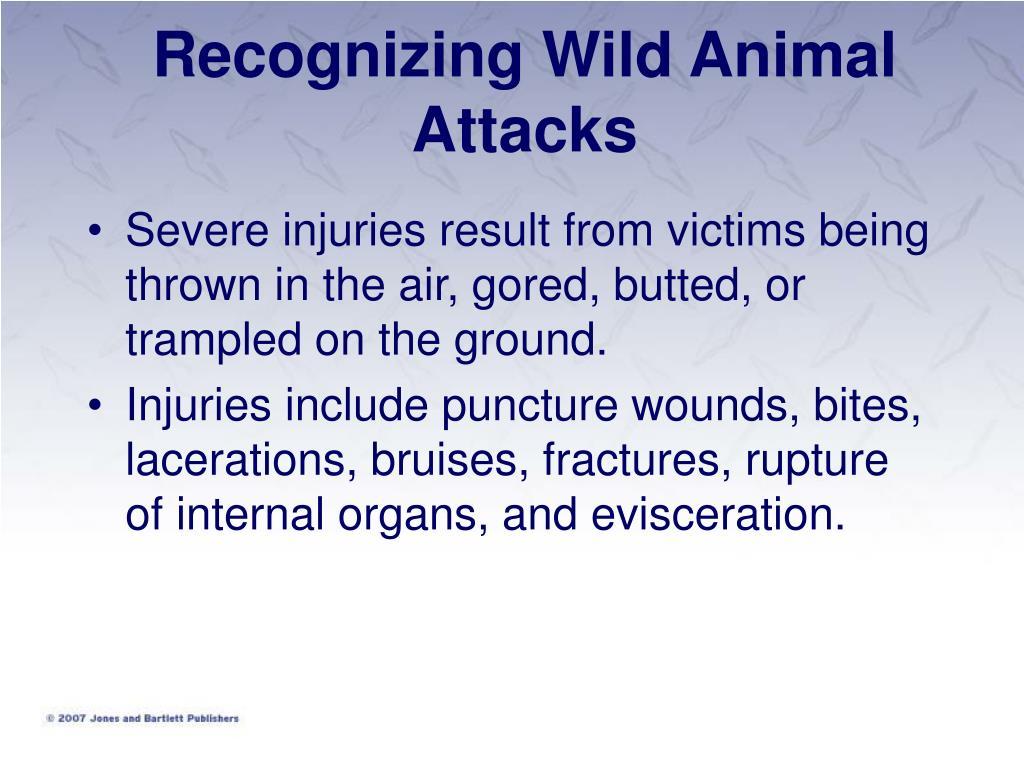 Recognizing Wild Animal Attacks