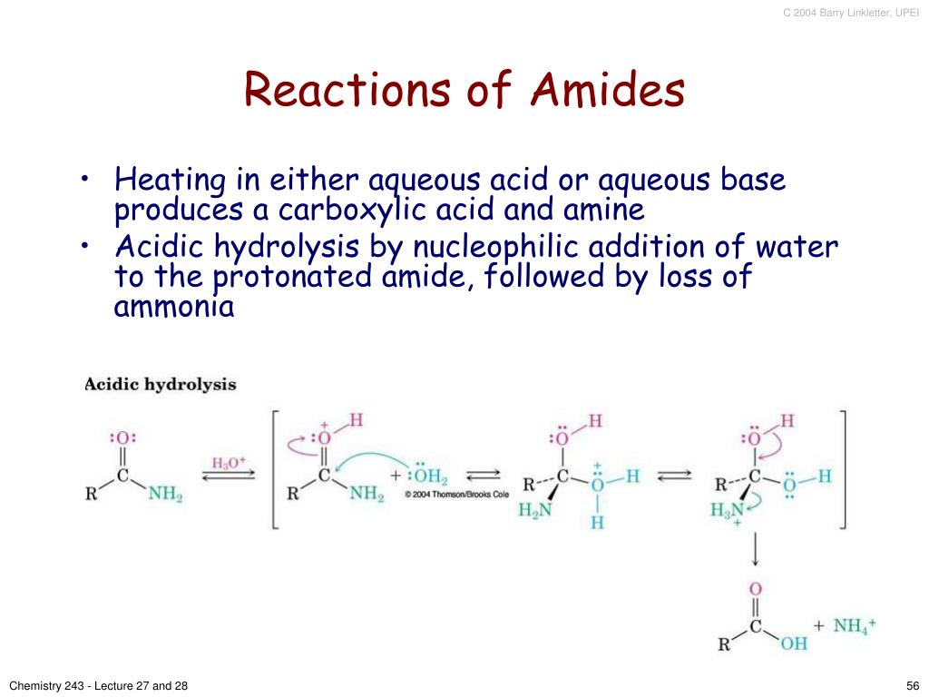 Reactions of Amides