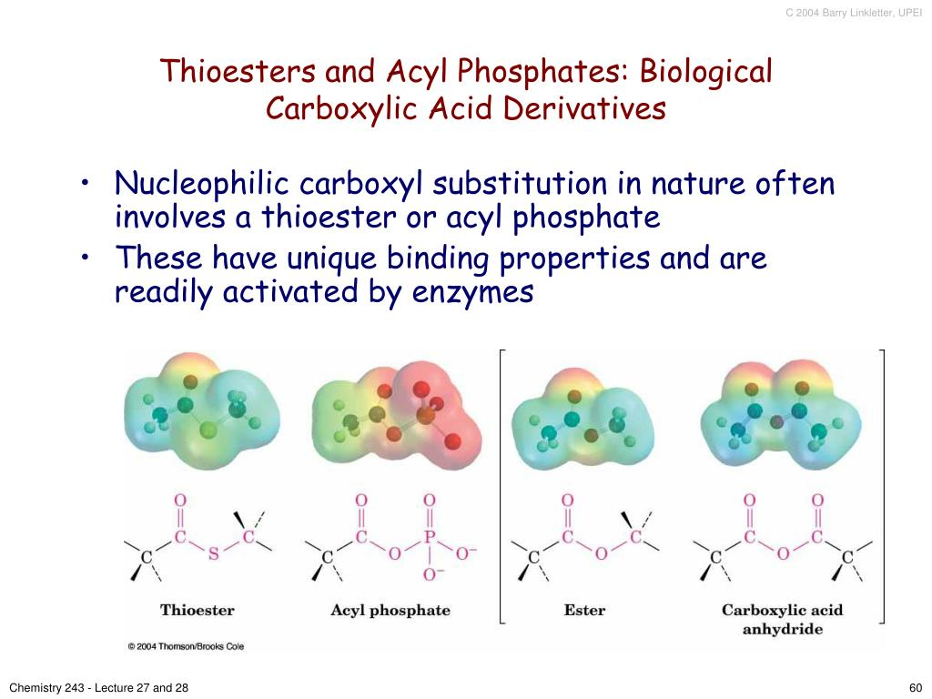 Thioesters and Acyl Phosphates: Biological Carboxylic Acid Derivatives