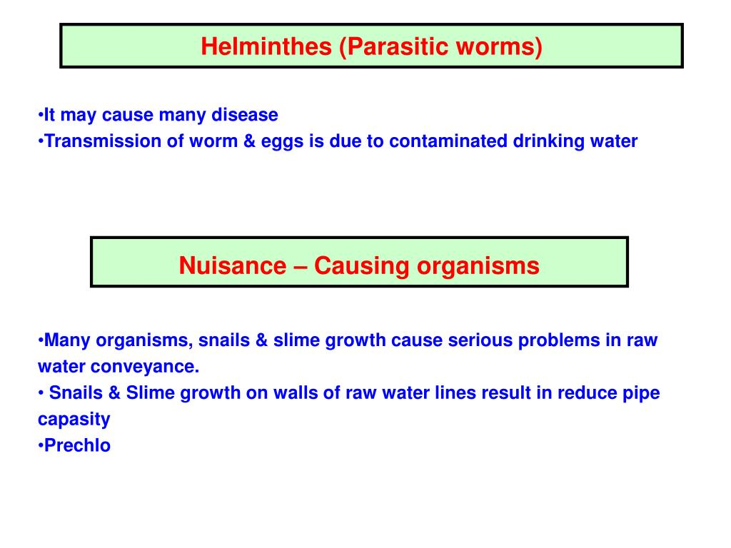 Helminthes (Parasitic worms)