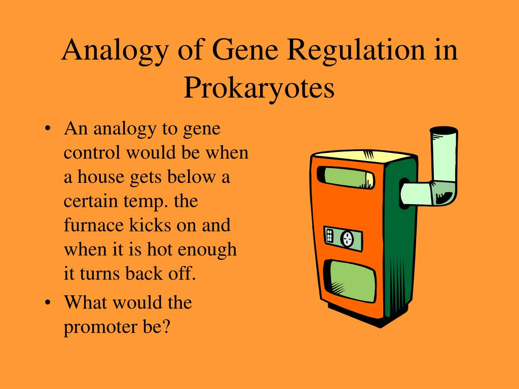 An analogy to gene control would be when a house gets below a certain temp. the furnace kicks on and when it is hot enough it turns back off.