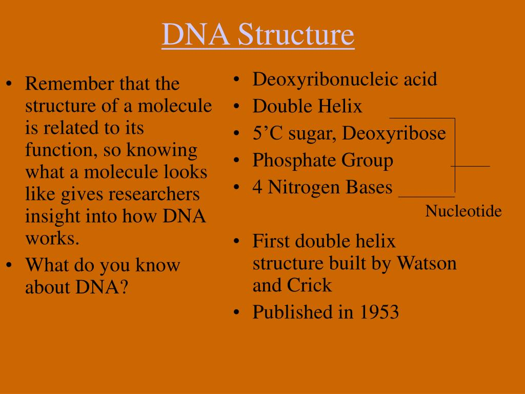 Remember that the structure of a molecule is related to its function, so knowing what a molecule looks like gives researchers insight into how DNA works.