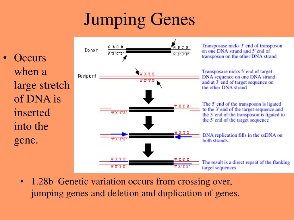 Occurs when a large stretch of DNA is inserted into the gene.
