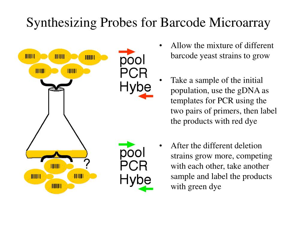 Synthesizing Probes for Barcode Microarray