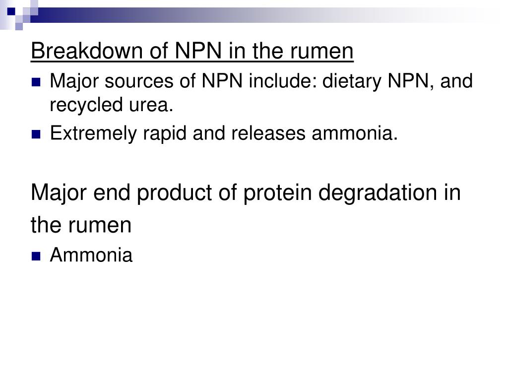Breakdown of NPN in the rumen