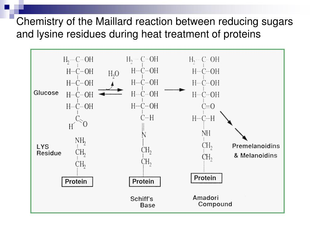 Chemistry of the Maillard reaction between reducing sugars and lysine residues during heat treatment of proteins